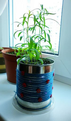 вырастить эстрагон из семян
