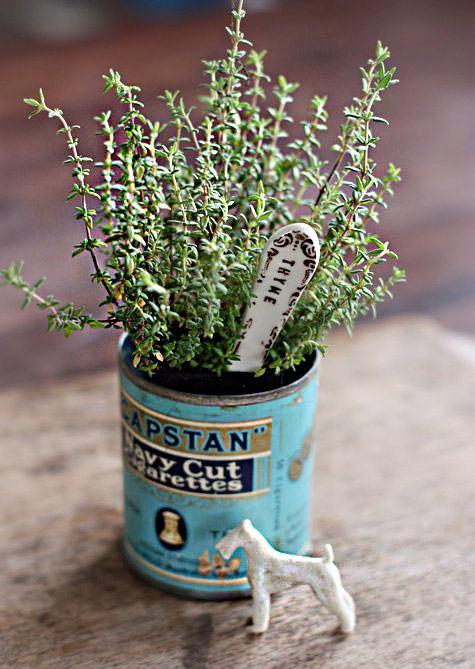 вырастить тимьян из семян