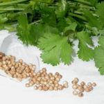 зелень кориандра семена кориандра