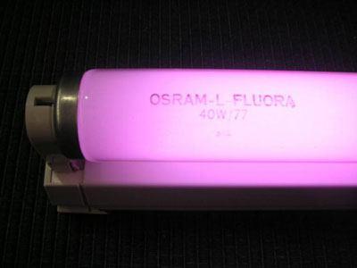 Osram Fluora