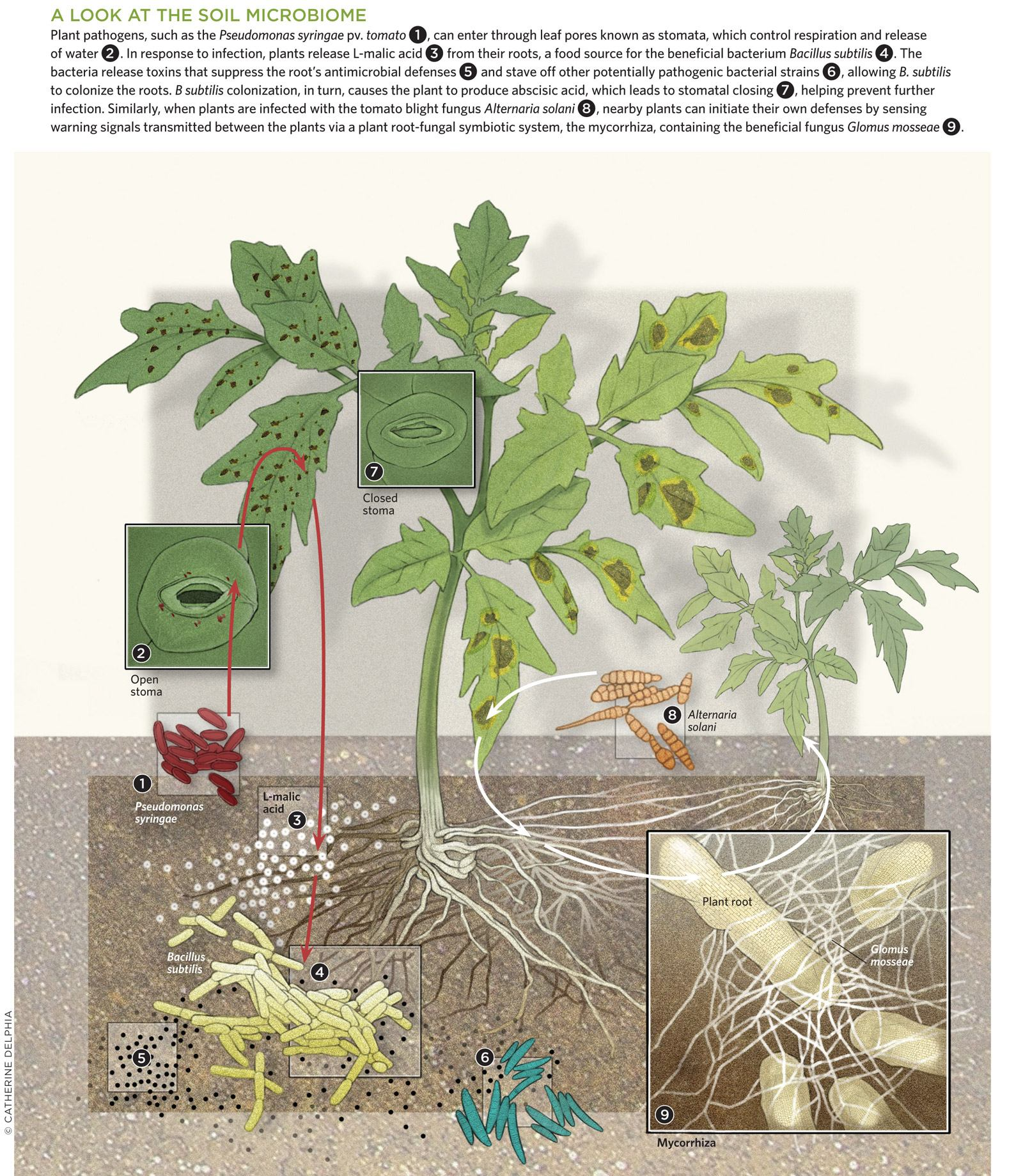 Микробиом почвы