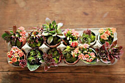 Растения в скорлупе