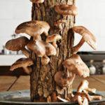 грибы на бревнах