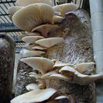 грибы на балконе