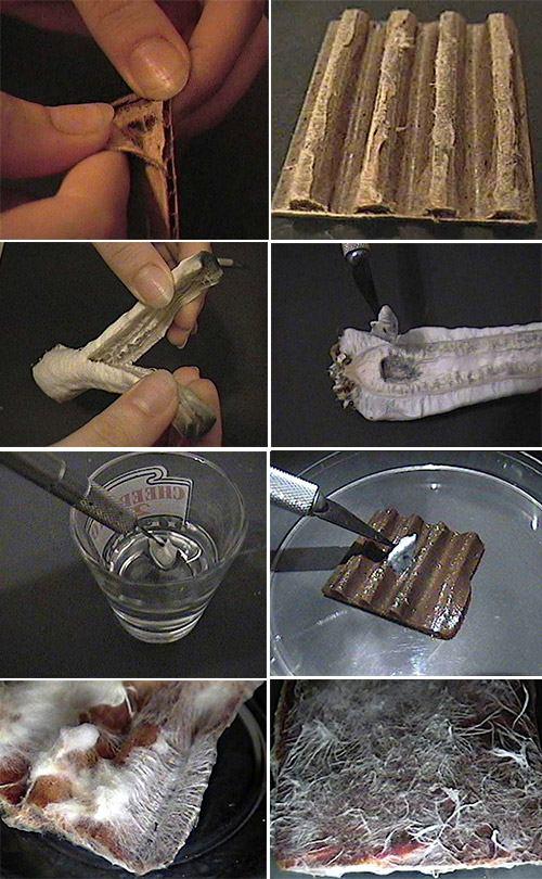 мицелий на картоне