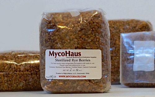 зерновой мицелий