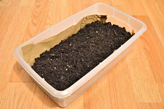 Почва для пшеницы