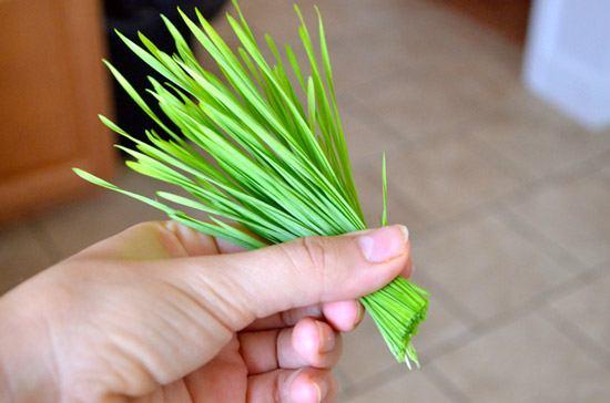 Пучок пшеницы