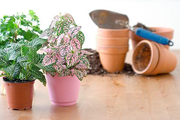 Как правильно пересадить растения
