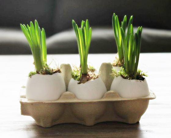 Вырастить тюльпаны к пасхе
