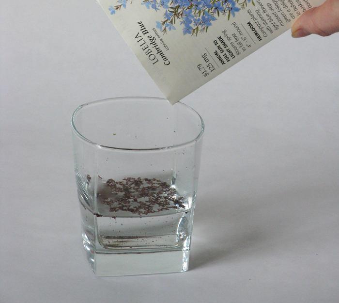 Как замачивать семена перед посадкой