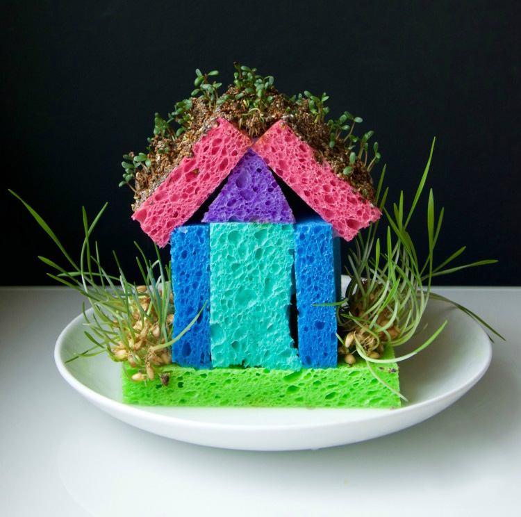 Прорастающий домик из губки