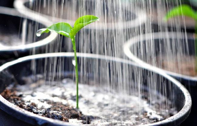 Перекись водорода для растений