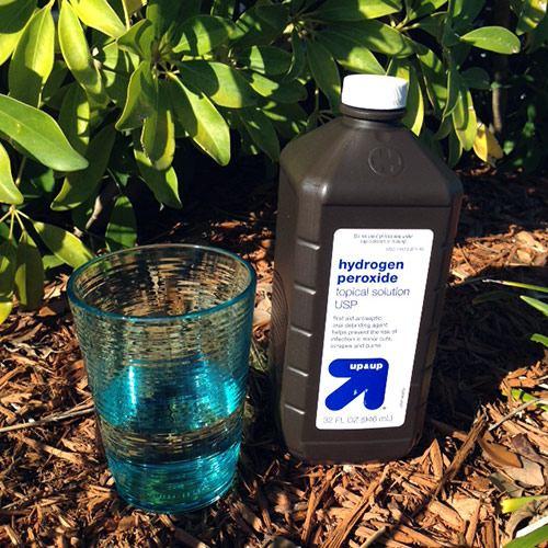 Перекись водорода для комнатных растений — применение для полива и дозировка