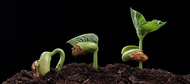 Перекись водорода для семян