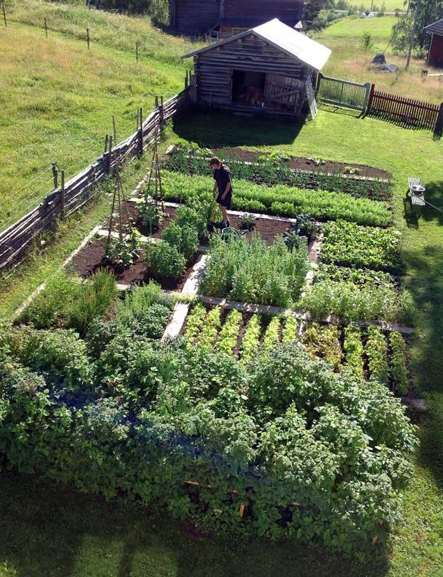 Огород для начинающих
