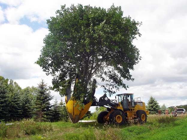Удаление деревьев техникой
