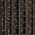 Успешный посев семян на рассаду