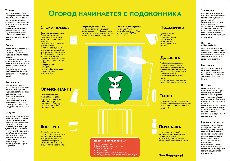 Инфографика рассада